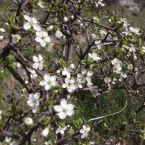 Пролет в Шарлия 2