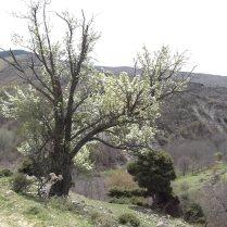 Пролет в Шарлия 1
